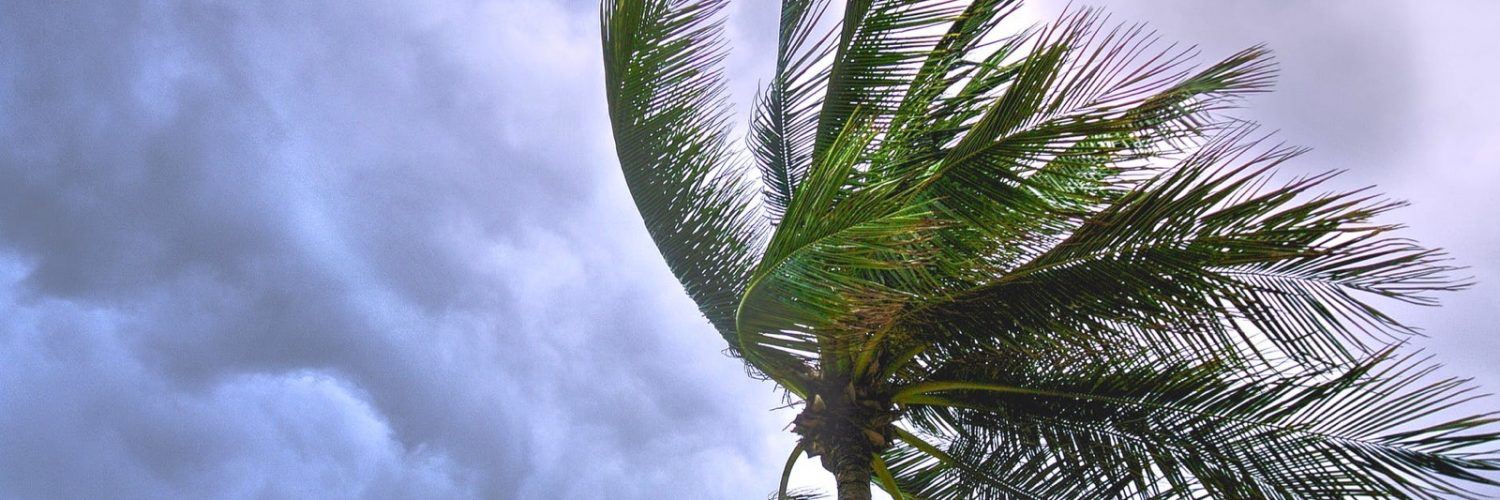 A palm tree in a storm